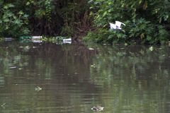 Verschmutzung Pinheiros-Fluss stockfoto
