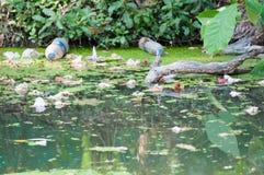 Verschmutzung vom Abwasser Lizenzfreie Stockfotografie