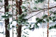 Verschneiter Winter in Lappland Finnland, Schnee coveres alle thetrees und Niederlassungen lizenzfreie stockfotos