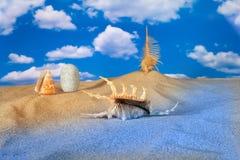 Verschönern Sie mit Seashell und Steinen auf Himmel landschaftlich Stockfotografie