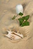 Verschönern Sie mit Seashell und Steinen auf Himmel landschaftlich Lizenzfreie Stockfotografie