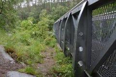 Verschobener Standpunkt nahe bei Vegetation Stockbilder