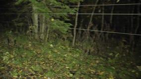 Verschrikkingsscène van een eng bos stock footage