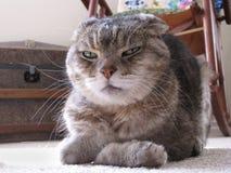 Verschrobe Katze mit den Tatzen gefaltet und blendend Ausdruck Stockbild