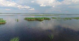 Verschütten Sie breiten Fluss mit Inseln von Schilfen und von Wildenten stock video
