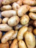 Verse aardappel Stock Foto's