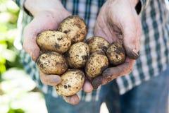 Verse aardappels Stock Foto's