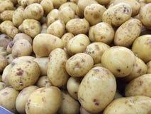 Verse aardappels royalty-vrije stock foto