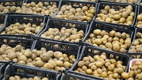 Verse aardappels in de doos Opslaghuis Stock Foto