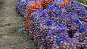 Verse aardappels in de zakken Opslaghuis Stock Fotografie
