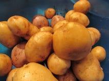 Verse aardappels voor vegane royalty-vrije stock foto's
