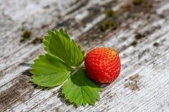 Verse aardbei - gezonde voeding Royalty-vrije Stock Afbeeldingen