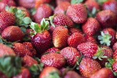 Verse aardbeien Stock Foto's