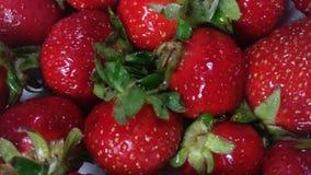 Verse aardbeien stock video