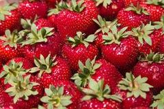 Verse aardbeien belangrijk Stock Foto