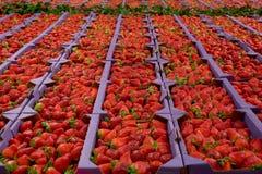 Verse Aardbeien bij een Markt Stock Foto's