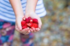 Verse aardbeien in de handen royalty-vrije stock foto's