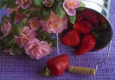Verse aardbeien in een aluminiumemmer royalty-vrije stock foto's