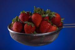 Verse aardbeien in een vergiet op een blauwe achtergrond stock foto