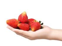 Verse aardbeien in handen Stock Foto