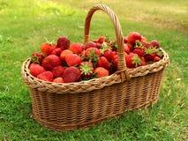 Verse aardbeien in mand Royalty-vrije Stock Foto's
