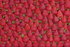 Verse aardbeien voor verkoop Royalty-vrije Stock Foto's