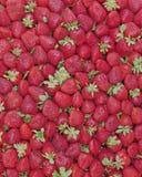 Verse aardbeien voor verkoop Stock Foto