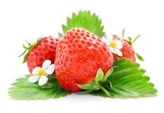 Verse aardbeivruchten met bloemen en bladeren stock afbeeldingen