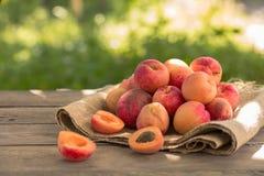Verse abrikozen in tuin oogstlandbouwer die mandhoogtepunt van abrikozen tonen royalty-vrije stock afbeeldingen