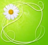 Verse achtergrond met margriet vector illustratie