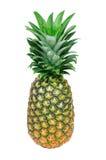 Verse ananas Royalty-vrije Stock Fotografie
