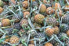 Verse ananassen in markt stock fotografie