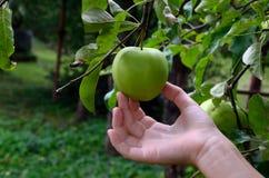 Verse appel en hand Stock Fotografie