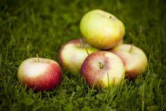 Verse appelen Stock Foto