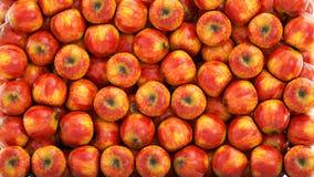 Verse appelenachtergrond Het concept van het voedsel het 3d teruggeven Royalty-vrije Stock Afbeeldingen