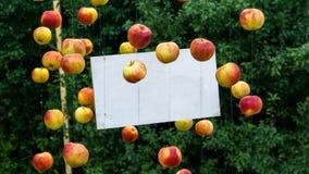 Verse appelenregeling rond van een witte raad royalty-vrije stock foto's