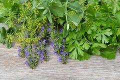 Verse aromatische kruiden stock foto's