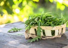 Verse arugulabladeren op houten kom, rucola Arugularucola voor salade royalty-vrije stock afbeeldingen