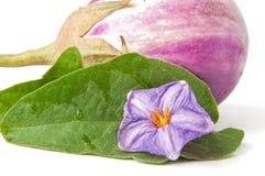 Verse aubergine Royalty-vrije Stock Afbeelding