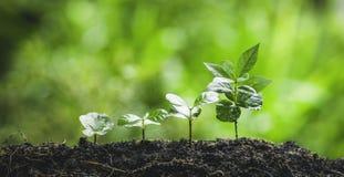 Verse Avocado in witte platePlant koffieboom het Groeien Koffie, hand het Water geven stock foto