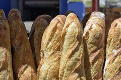 Verse baguettes in mand royalty-vrije stock afbeelding