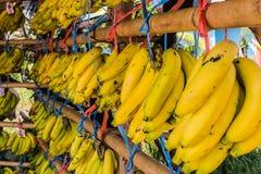 Verse Bananen Royalty-vrije Stock Foto