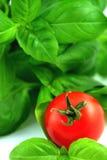 Verse basilicum en tomaat Royalty-vrije Stock Afbeeldingen