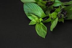 Verse Basilicumbladeren op een zwarte achtergrond royalty-vrije stock foto's