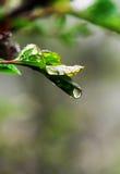 Verse bladeren Stock Afbeelding