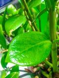 Verse bladeren in de tuin stock afbeelding