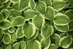 Verse bladerenAchtergrond stock foto's