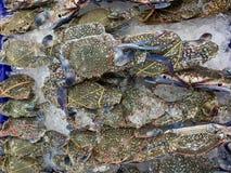 verse blauwe krab op plank in markt royalty-vrije stock foto