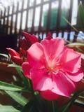 Verse bloem Stock Fotografie