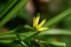 Verse bloem Stock Afbeelding
